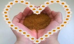 перга пчелиная свойства